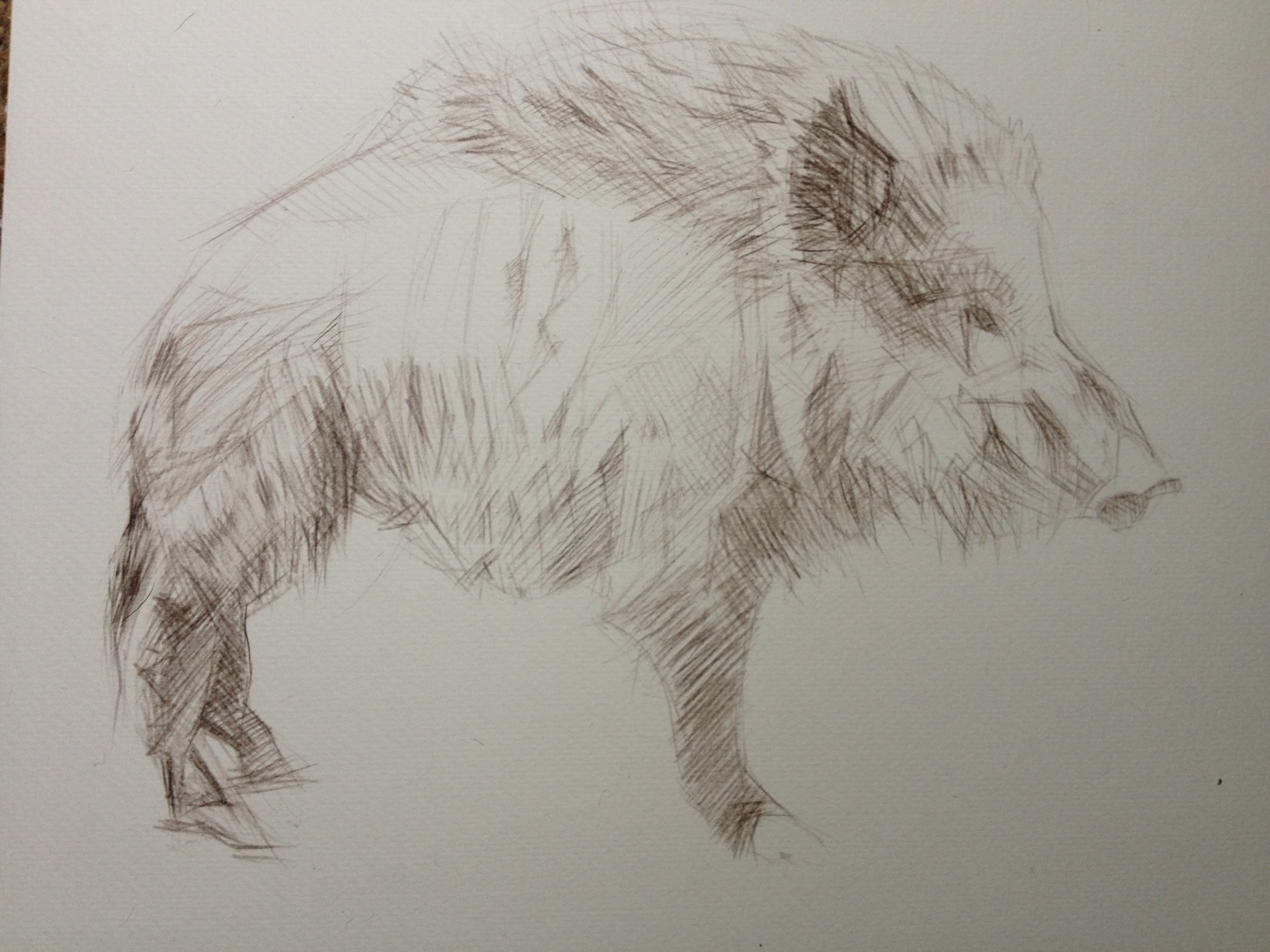 Wild Boar Sketch A wild animal  a symbol ofWild Boar Sketch